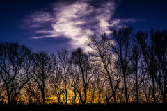 Sunrise Silhouette. A tree landscape at dawn with beautiful clouds image Stock Photo