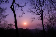 Sunrise with silhouette of tree. And the purple sky stock images