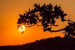 Sunrise in Simeiz, Yalta, Crimea, Ukraine, summer Stock Image