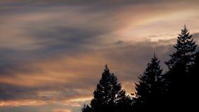 Sunrise Sky With Trees stock footage