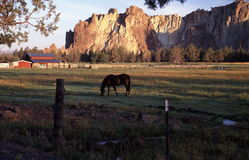 Sunrise at Smith Rock St. Park. Horse grazing in a pasture with Smith Rock State park in the back ground Royalty Free Stock Images