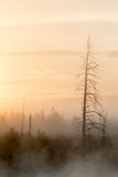 Sunrise in smoky forest portrait Stock Photo
