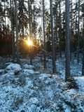 Winter forest. Sunrise in snowy forest Royalty Free Stock Photography