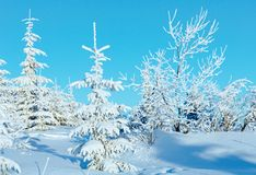 Sunrise and snowy trees on hill Stock Photo