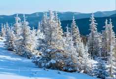 Sunrise and snowy trees on hill Royalty Free Stock Photo