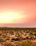 Sunrise Sonora Desert. In central Arizona USA Royalty Free Stock Photo