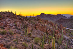 Sunrise in the sonoran desert. Hdr image Stock Images