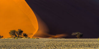 . Sunrise in Sossusvlei: panoramic view of a famous red dune 40 and acacia tree at the foot of it Stock Image