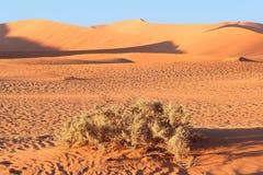 Sunrise Sossusvlei sand dunes, Namibia. Sunrise in the orange sand dunes of Sossusvlei, Namibia Royalty Free Stock Photo