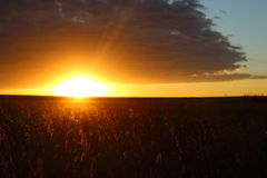 Sunrise. At soybean field Stock Photo