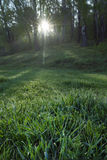Sunrise In The Spring Forest Royalty Free Stock Image