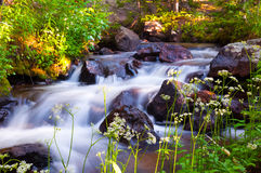 Sunrise Spring Mountain Creek Royalty Free Stock Image