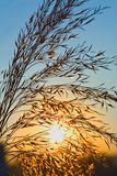 Sunrise in spring or summer Royalty Free Stock Photos