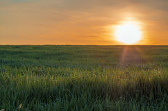 Sunrise at spring time on the grass field. Field of grass ander sun beams in spring Stock Images