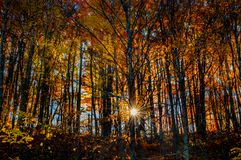Sunrise starburst through fall foliage. stock photography
