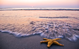 Sunrise and starfish Royalty Free Stock Photo