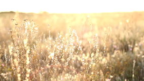 Sunrise In The Steppe Stock Photography