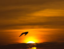 Bird silhouetted in sunrise on a stormy morning Royalty Free Stock Photo