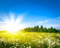 Sunrise on summer green field Royalty Free Stock Photo