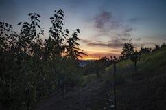 Sunrise in the summer in Montespertoli stock images