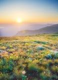 Sunrise in summer mountains. Stock Photos