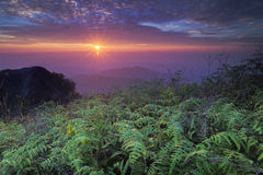 Sunrise in the summit of Mt. Ophir in Malaysia after the rain Stock Image