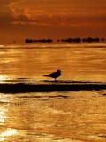 Sunrise. Sun Lake Water Sunset Sky Clouds Outdoor Outdoorlife River Nature Naturelovers Birds Stock Image