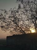Sunrise. Sun is rising through the leaves of a tree royalty free stock images