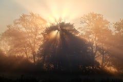 Sunrise sunbeams in dense fog Stock Photography