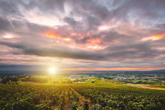 Sunrise with sunflare over vineyards of Beaujolais, France Royalty Free Stock Photography