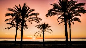 Sunrise between palms by the Mediterranean Sea  in Cullera, Valencia royalty free stock photo