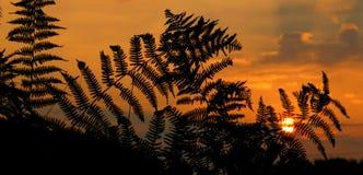 Sunrise, Sunset, Fern Royalty Free Stock Photography