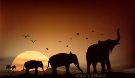 Sunrise and sunset over the savannah. With three elephants Stock Photo