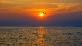 Sunrise and sunset with seagulls flying around stock photos