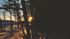 Sunrise sunset through trees branches in winter. Snow forest sunshining 4k. Sunrise sunset through trees branches in winter. Snow forest sunny weather 4k stock video footage