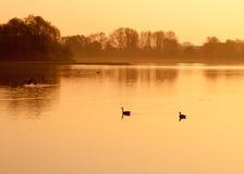 Sunrise SUP Yoga. Birds enjoying this stunning sunrise scene on the lake Stock Photos
