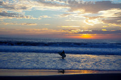 Sunrise surfer Royalty Free Stock Photo