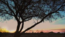 Arizona sunrise Royalty Free Stock Photo