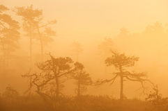 Sunrise in swamp royalty free stock image