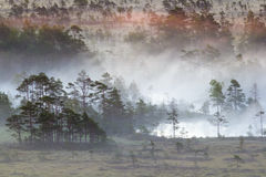 Sunrise in the swamp stock photography