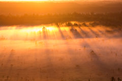 Sunrise in the swamp Royalty Free Stock Photos