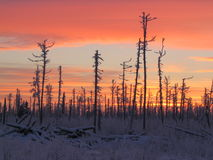 Sunrise in taiga Stock Photo