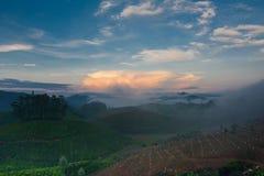 Sunrise at tea plantation. India, Munnar, Kerala Stock Photos