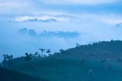 Sunrise at tea plantation. India, Munnar, Kerala Stock Image