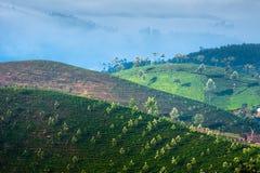 Sunrise at tea plantation. India, Munnar, Kerala Royalty Free Stock Images