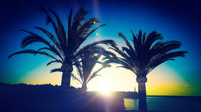 Sunrise and three palms Royalty Free Stock Photo