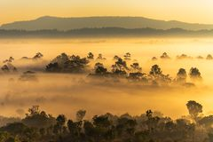 Sunrise at Thung Salaeng Luang National Park with mist in the forest, Phitsanulok and Phetchabun of Thailand. Sunrise at Thung Salaeng Luang National Park with stock photography