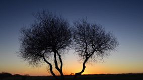 Sunrise Time Lapse. Time lapse of silhouette of trees at sunrise stock video