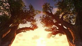 Sunrise timelapse between trees stock video footage