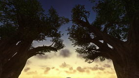 Sunrise timelapse between trees, night to day. Sunrise timelapse between trees night to day stock video footage